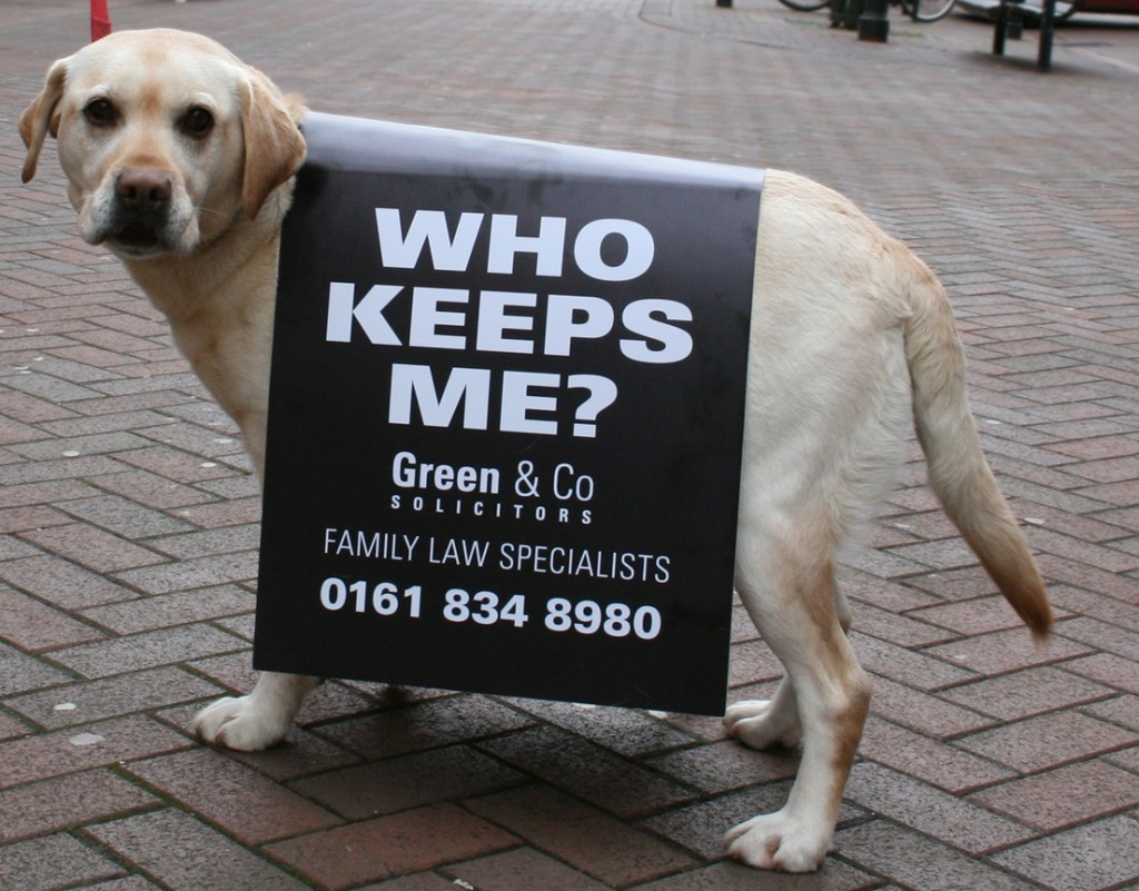 canine-advertising-1