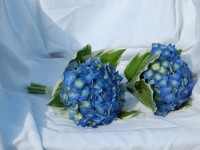 Tips For Choosing The Best Wedding Flowers For Your Wedding