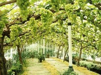 Best Way: How to Grow Fruit in a Greenhouse